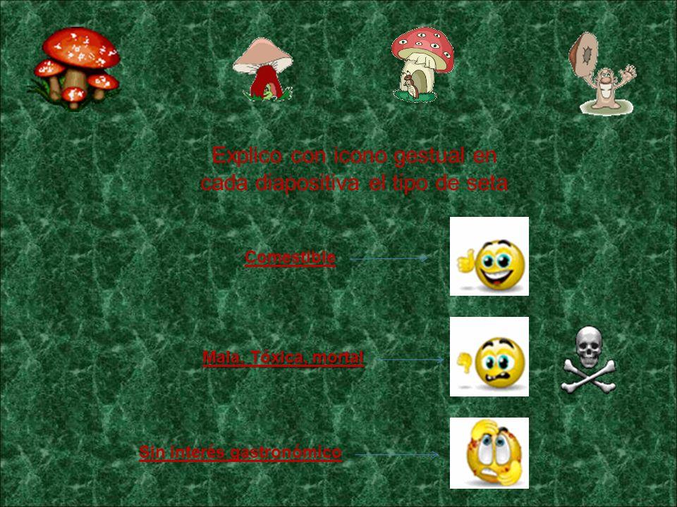Falsas reglas Tambi é n, desde la administraci ó n ambiental se explican las 7 falsas reglas para la recolecci ó n de setas y trufas, ya que no existe ninguna regla universal para saber si una seta es comestible o t ó xica: 1 º - Es falso que las setas consumidas o semidevoradas por animales son comestibles para las personas, ya que animales y personas tienen distinta fisiolog í a, algunas especies est á n adaptadas a los t ó xicos.