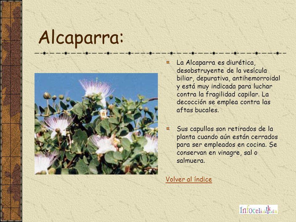 Alcaparra: La Alcaparra es diurética, desobstruyente de la vesícula biliar, depurativa, antihemorroidal y está muy indicada para luchar contra la frag