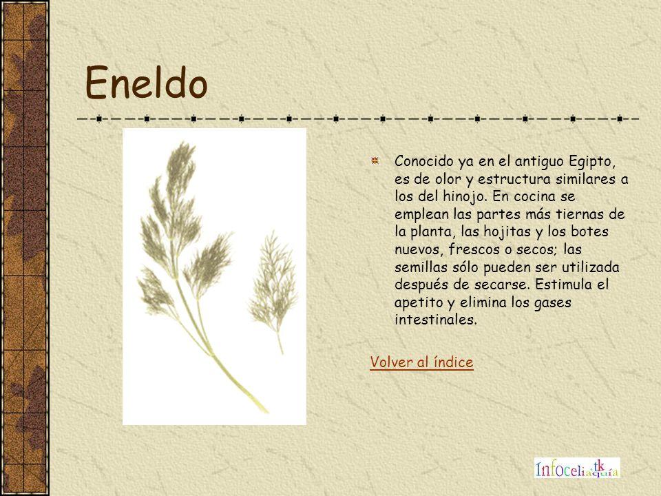 Eneldo Conocido ya en el antiguo Egipto, es de olor y estructura similares a los del hinojo. En cocina se emplean las partes más tiernas de la planta,