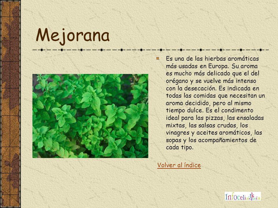 Mejorana Es una de las hierbas aromáticas más usadas en Europa. Su aroma es mucho más delicado que el del orégano y se vuelve más intenso con la desec
