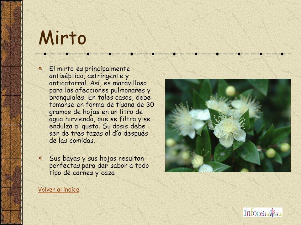 Mirto El mirto es principalmente antiséptico, astringente y anticatarral. Así, es maravilloso para las afecciones pulmonares y bronquiales. En tales c
