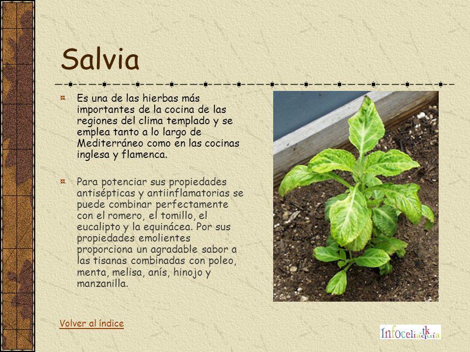 Salvia Es una de las hierbas más importantes de la cocina de las regiones del clima templado y se emplea tanto a lo largo de Mediterráneo como en las