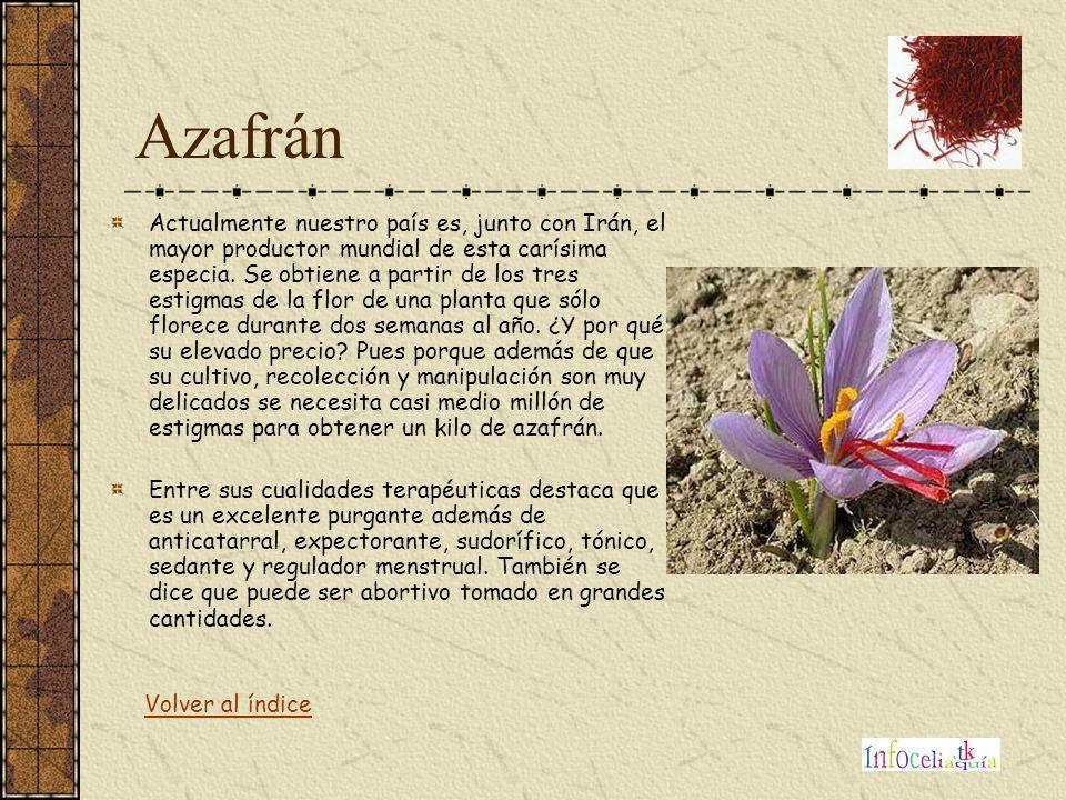 Azafrán Actualmente nuestro país es, junto con Irán, el mayor productor mundial de esta carísima especia. Se obtiene a partir de los tres estigmas de
