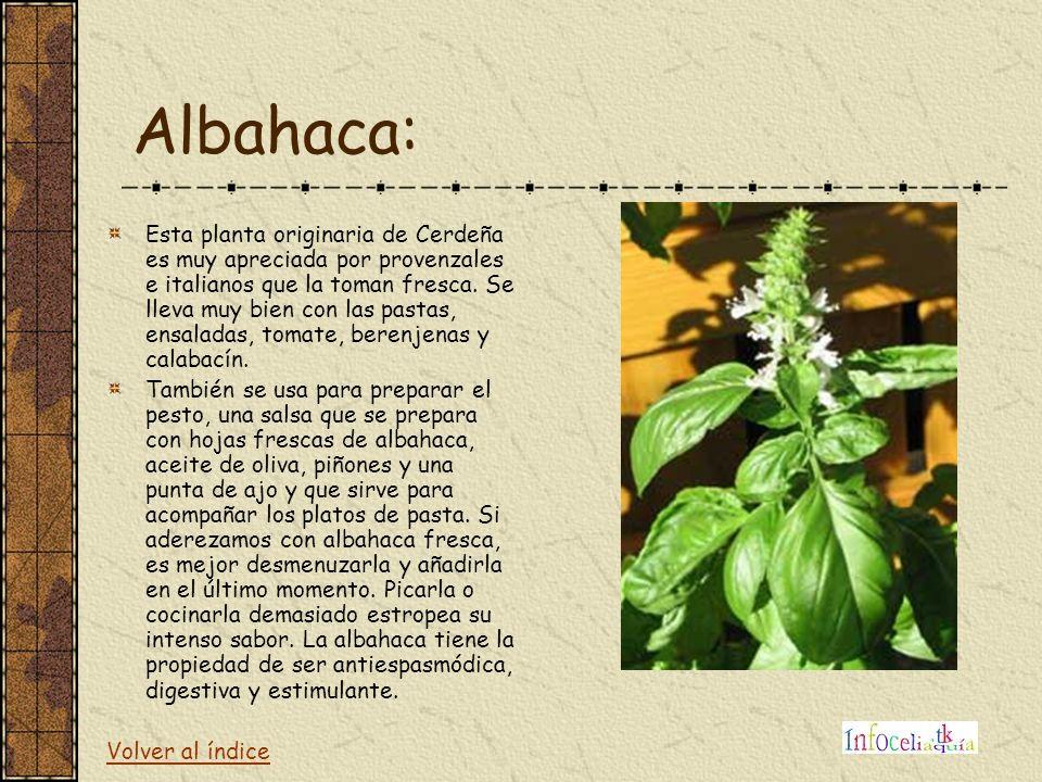 Albahaca: Esta planta originaria de Cerdeña es muy apreciada por provenzales e italianos que la toman fresca. Se lleva muy bien con las pastas, ensala