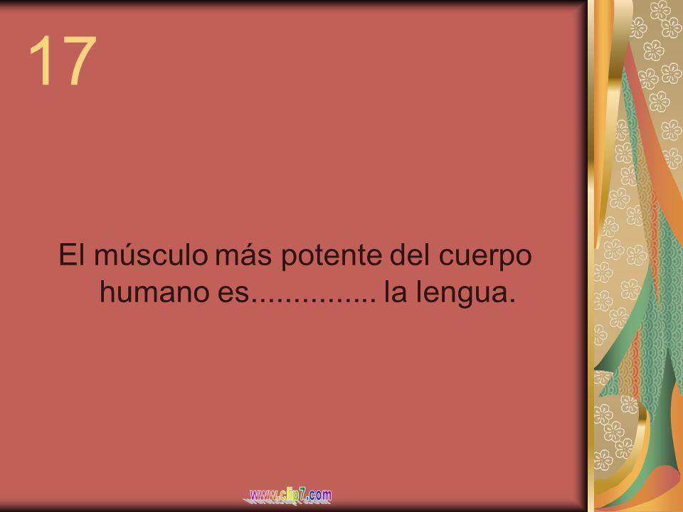17 El músculo más potente del cuerpo humano es............... la lengua.