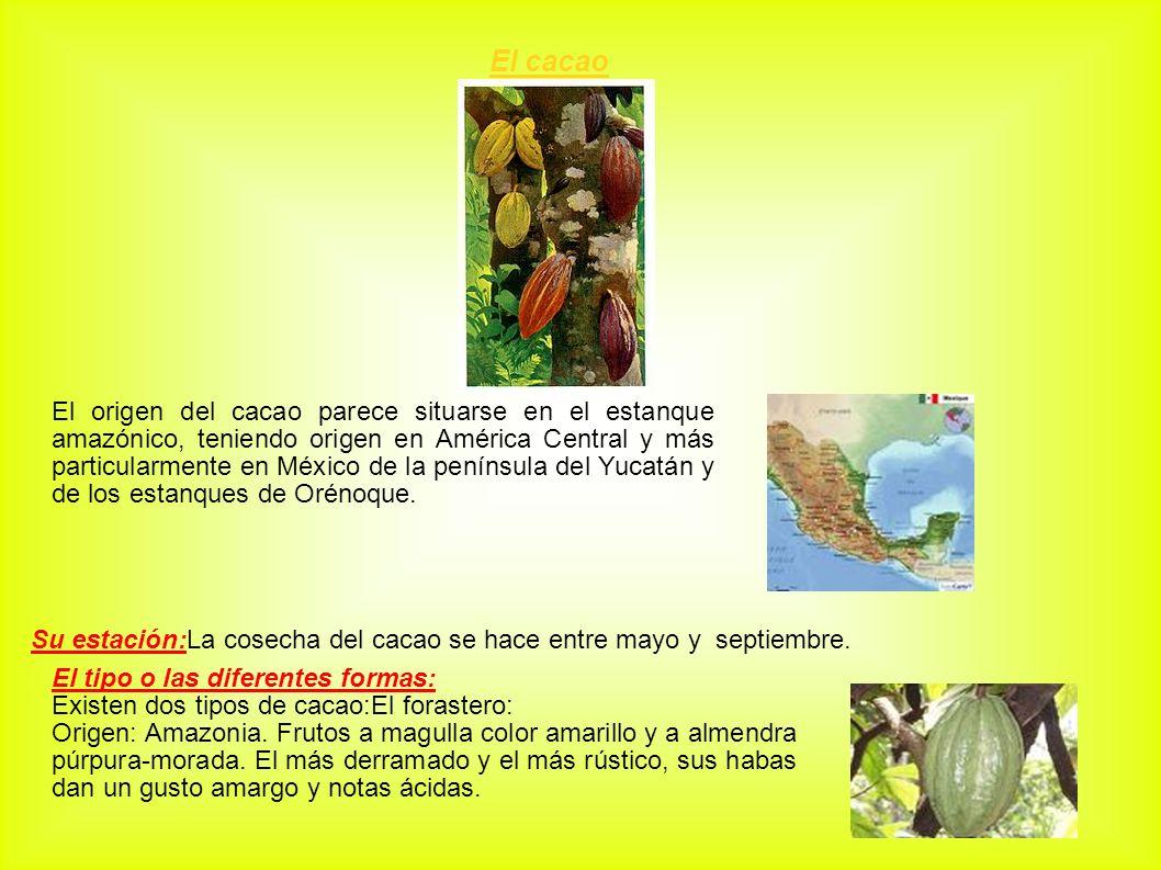 El cacao El origen del cacao parece situarse en el estanque amazónico, teniendo origen en América Central y más particularmente en México de la peníns