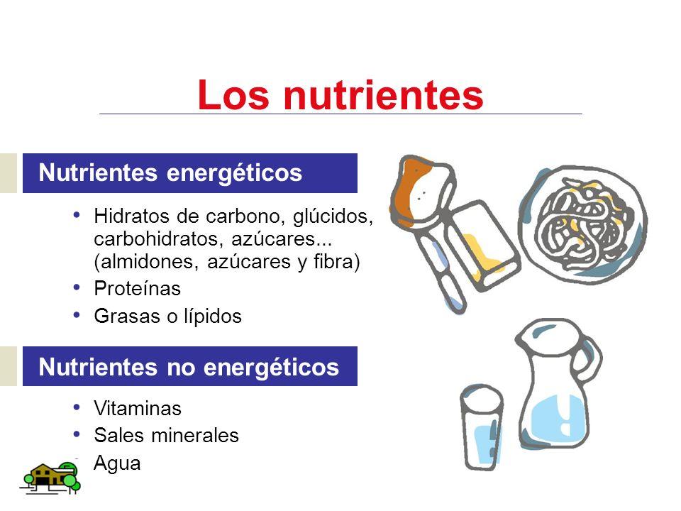 Los nutrientes Nutrientes energéticos Hidratos de carbono, glúcidos, carbohidratos, azúcares... (almidones, azúcares y fibra) Proteínas Grasas o lípid