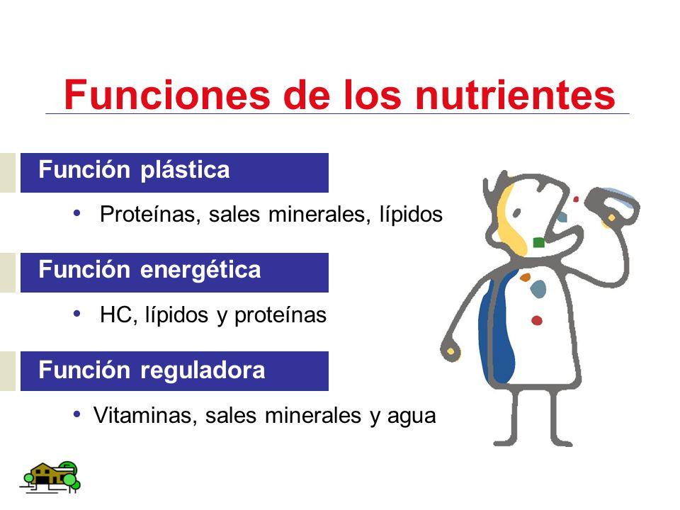 Funciones de los nutrientes Función plástica Proteínas, sales minerales, lípidos Función energética HC, lípidos y proteínas Función reguladora Vitamin