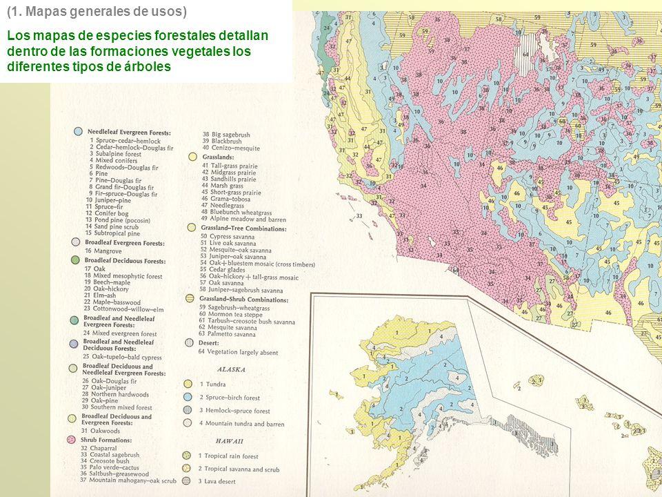 Los mapas de especies forestales detallan dentro de las formaciones vegetales los diferentes tipos de árboles (1. Mapas generales de usos)