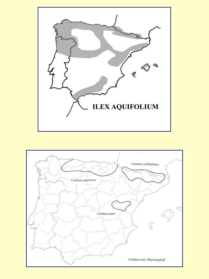REPRESENTACIÓN DEL MAPA ÁREA DE PUNTOS