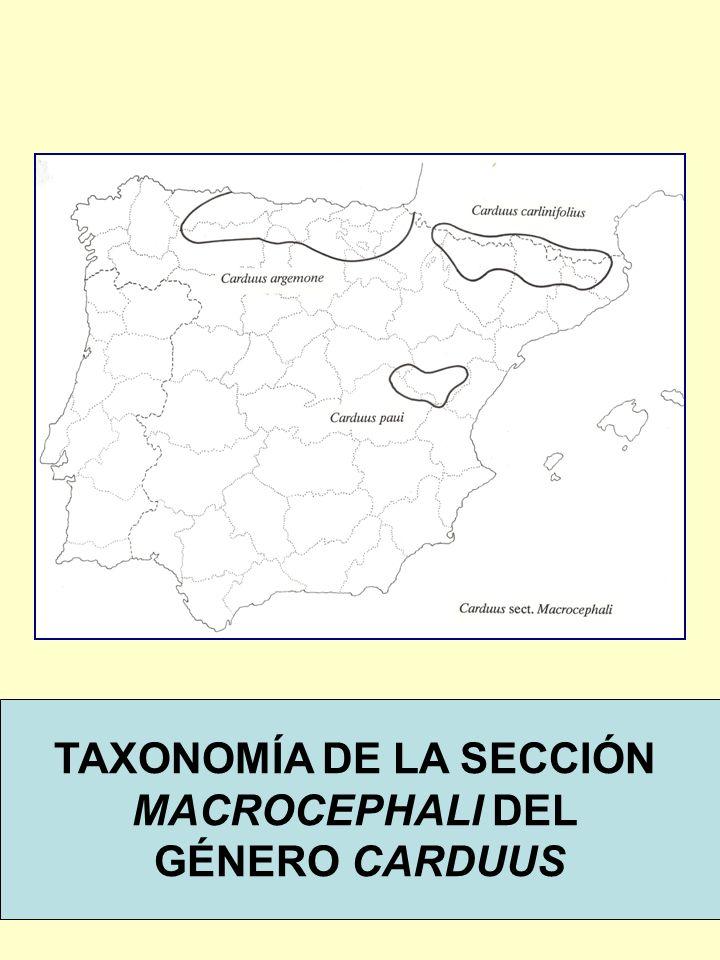 TAXONOMÍA DE LA SECCIÓN MACROCEPHALI DEL GÉNERO CARDUUS