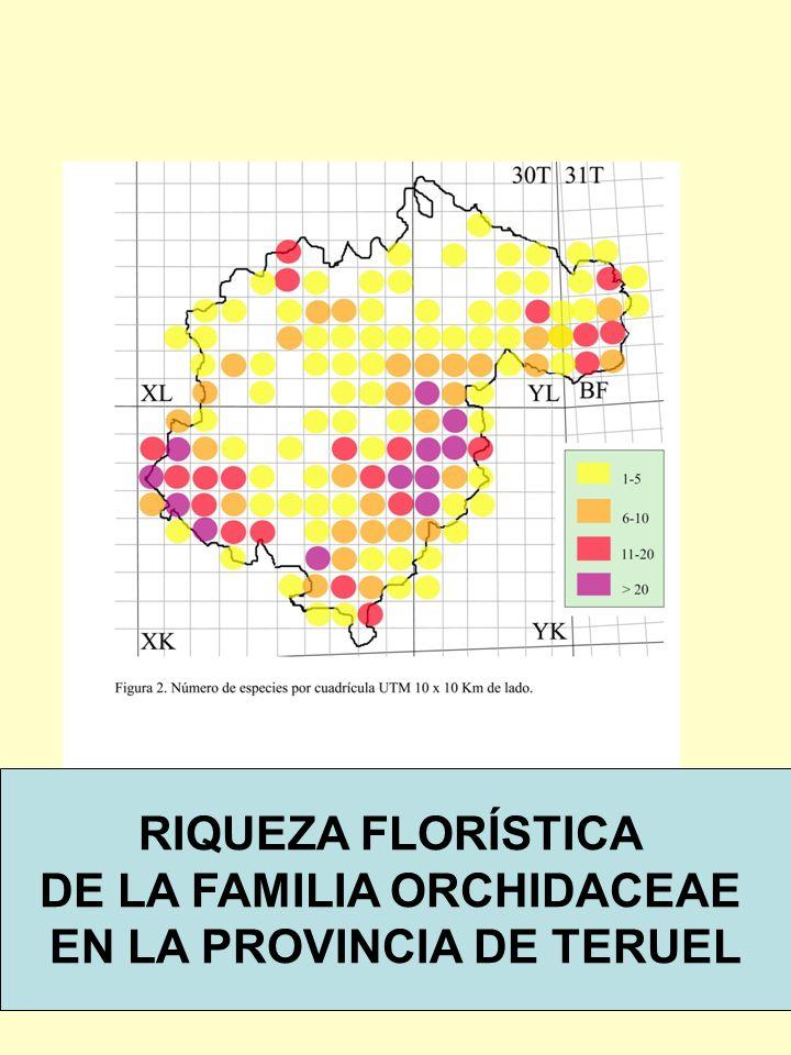 RIQUEZA FLORÍSTICA DE LA FAMILIA ORCHIDACEAE EN LA PROVINCIA DE TERUEL RIQUEZA FLORÍSTICA DE LA FAMILIA ORCHIDACEAE EN LA PROVINCIA DE TERUEL