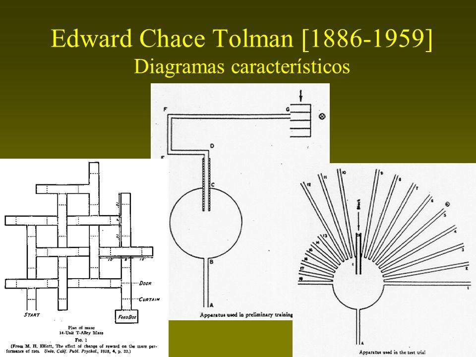 Edward Chace Tolman [1886-1959] Conductismo intencional Interponía variables intervinientes (cogniciones, propósitos, expectativas) entre los estímulos y las respuestas –Los estímulos entrantes no se conectan mediante clavijas unidireccionales a las respuestas salientes.
