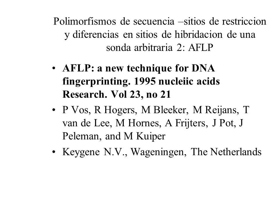 Polimorfismos de secuencia –sitios de restriccion y diferencias en sitios de hibridacion de una sonda arbitraria 2: AFLP AFLP: a new technique for DNA