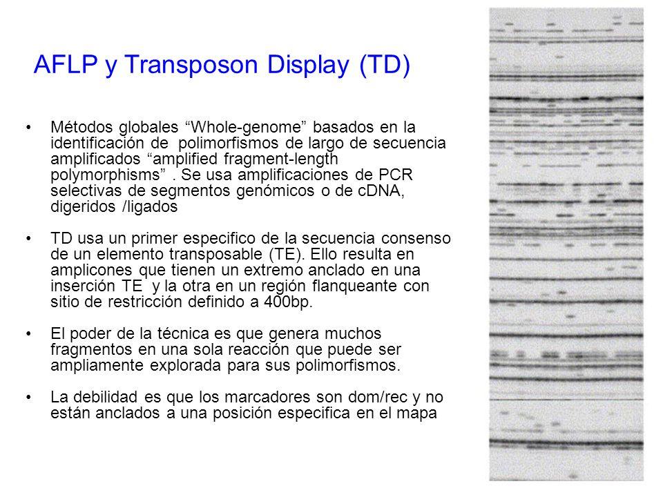 Métodos globales Whole-genome basados en la identificación de polimorfismos de largo de secuencia amplificados amplified fragment-length polymorphisms