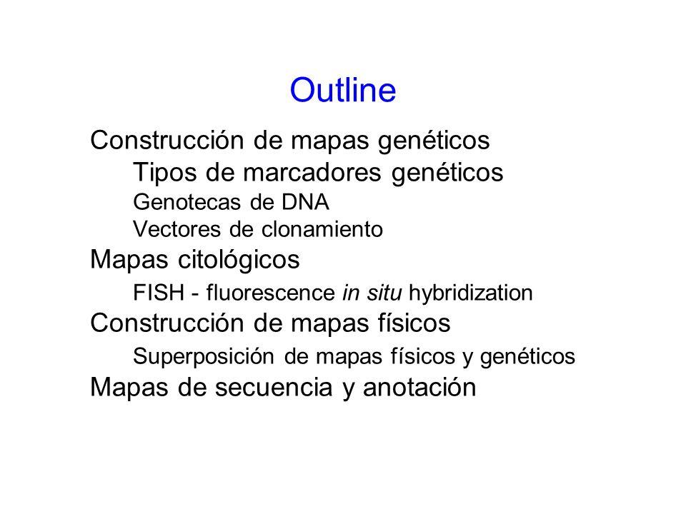 Construcción de mapas genéticos Tipos de marcadores genéticos Genotecas de DNA Vectores de clonamiento Mapas citológicos FISH - fluorescence in situ h