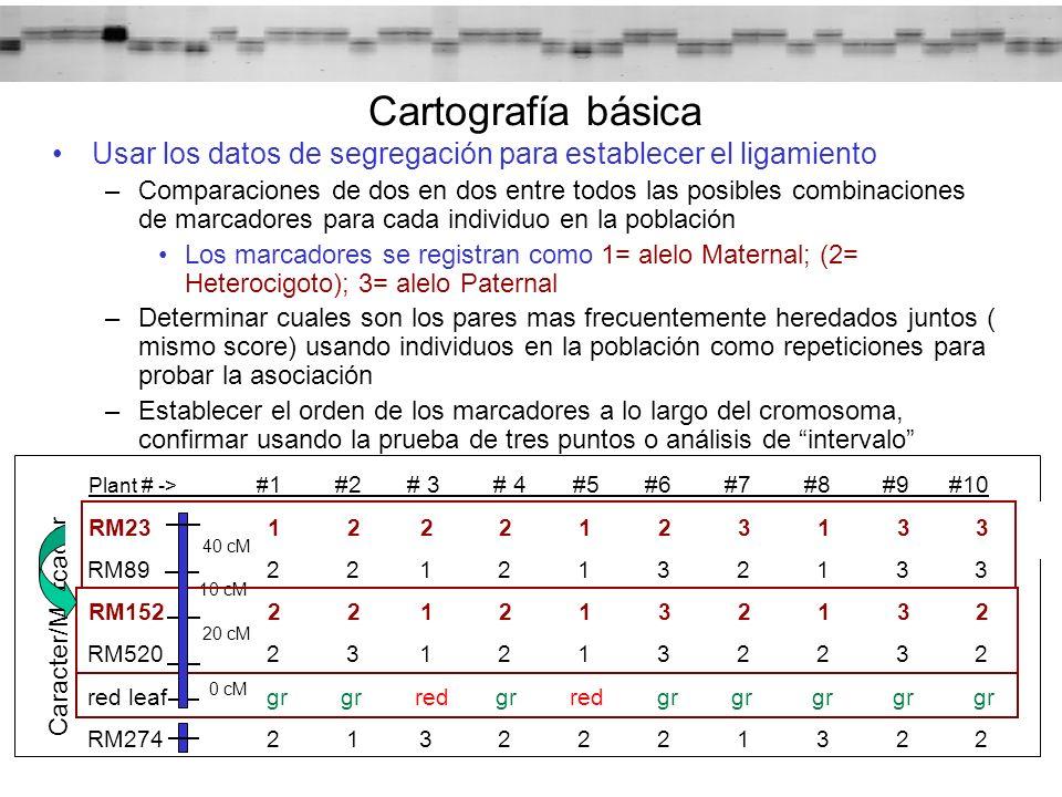 Usar los datos de segregación para establecer el ligamiento –Comparaciones de dos en dos entre todos las posibles combinaciones de marcadores para cad