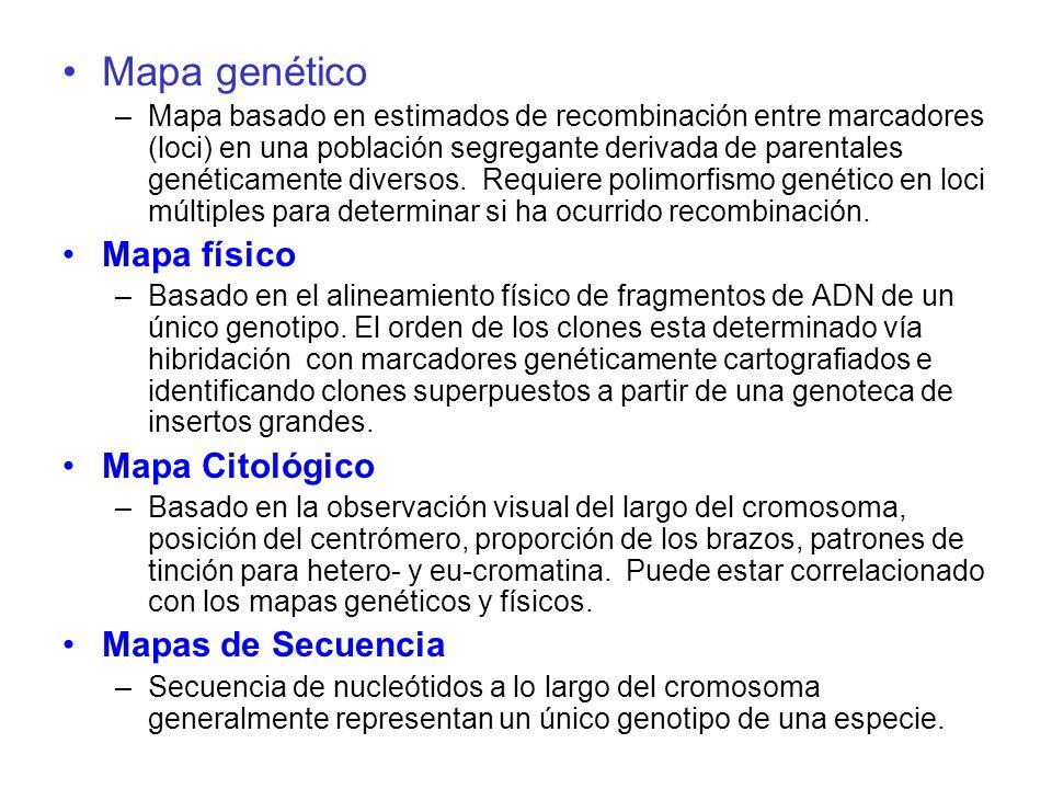 Mapa genético –Mapa basado en estimados de recombinación entre marcadores (loci) en una población segregante derivada de parentales genéticamente dive