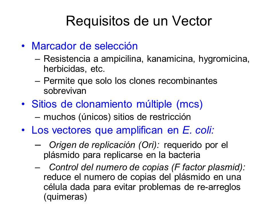 Requisitos de un Vector Marcador de selección – Resistencia a ampicilina, kanamicina, hygromicina, herbicidas, etc. – Permite que solo los clones reco
