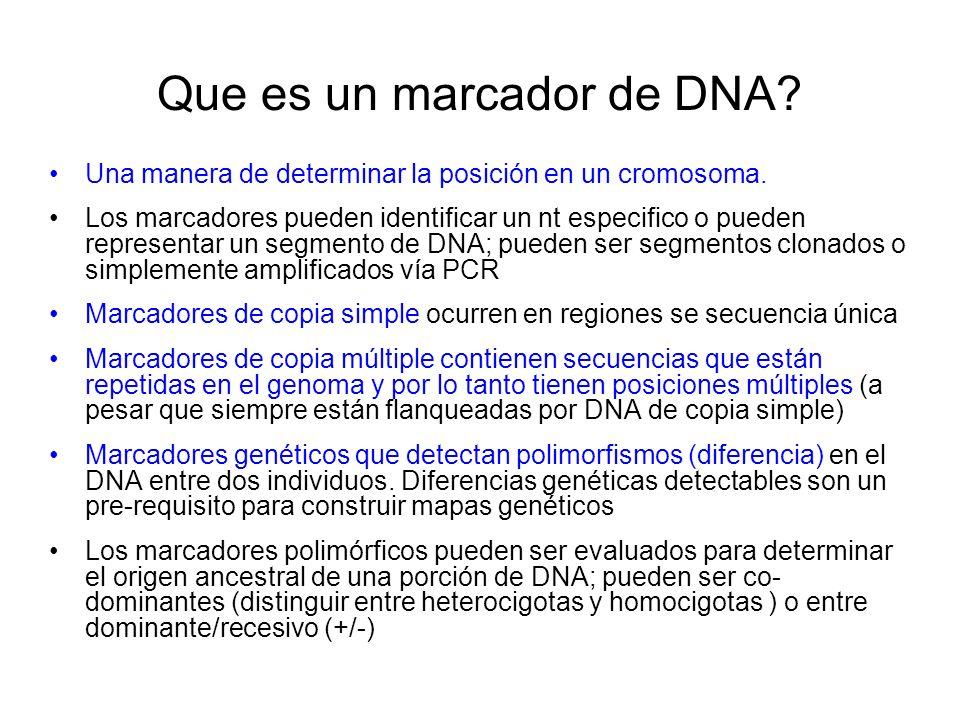 Que es un marcador de DNA? Una manera de determinar la posición en un cromosoma. Los marcadores pueden identificar un nt especifico o pueden represent
