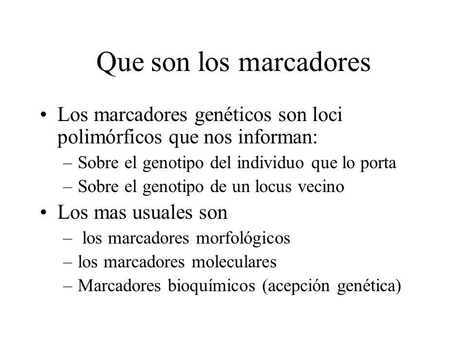 Que son los marcadores Los marcadores genéticos son loci polimórficos que nos informan: –Sobre el genotipo del individuo que lo porta –Sobre el genoti