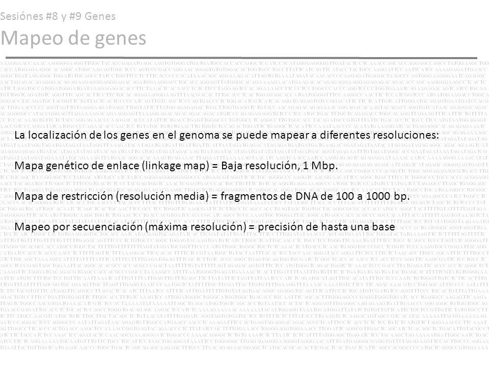 Sesiónes #8 y #9 Genes Mapeo de genes La localización de los genes en el genoma se puede mapear a diferentes resoluciones: Mapa genético de enlace (li
