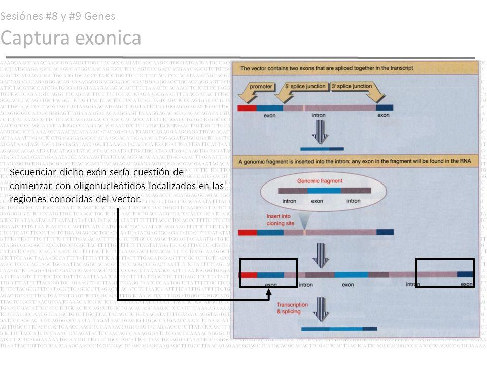 Sesiónes #8 y #9 Genes Captura exonica Secuenciar dicho exón sería cuestión de comenzar con oligonucleótidos localizados en las regiones conocidas del