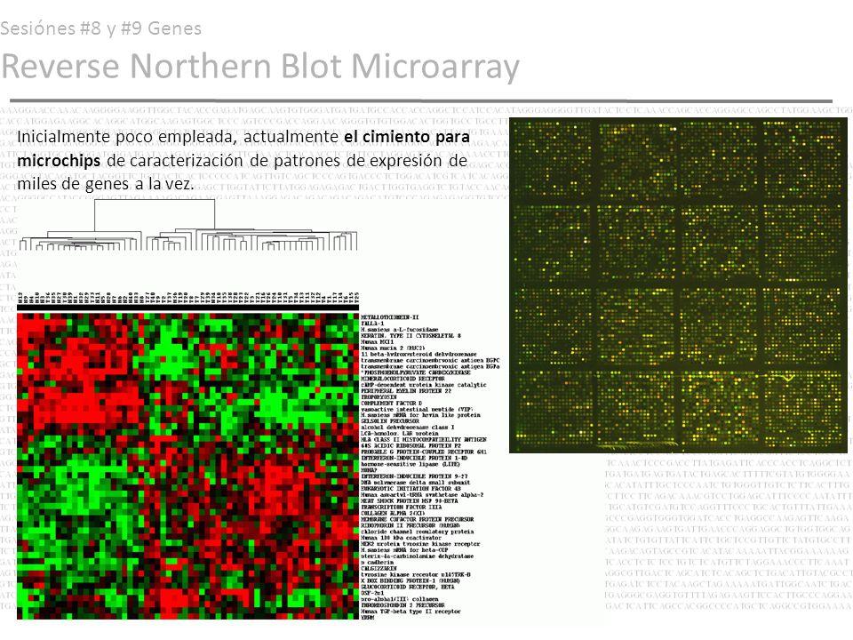 Sesiónes #8 y #9 Genes Reverse Northern Blot Microarray Inicialmente poco empleada, actualmente el cimiento para microchips de caracterización de patr