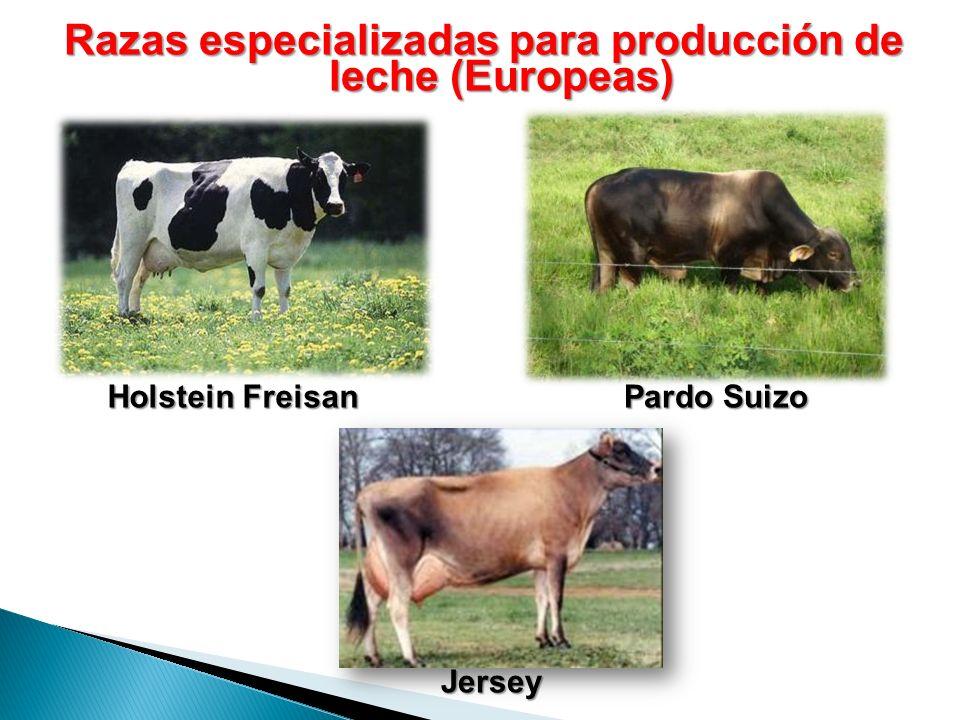 Razas especializadas para producción de leche (Europeas) Holstein Freisan Pardo Suizo Jersey