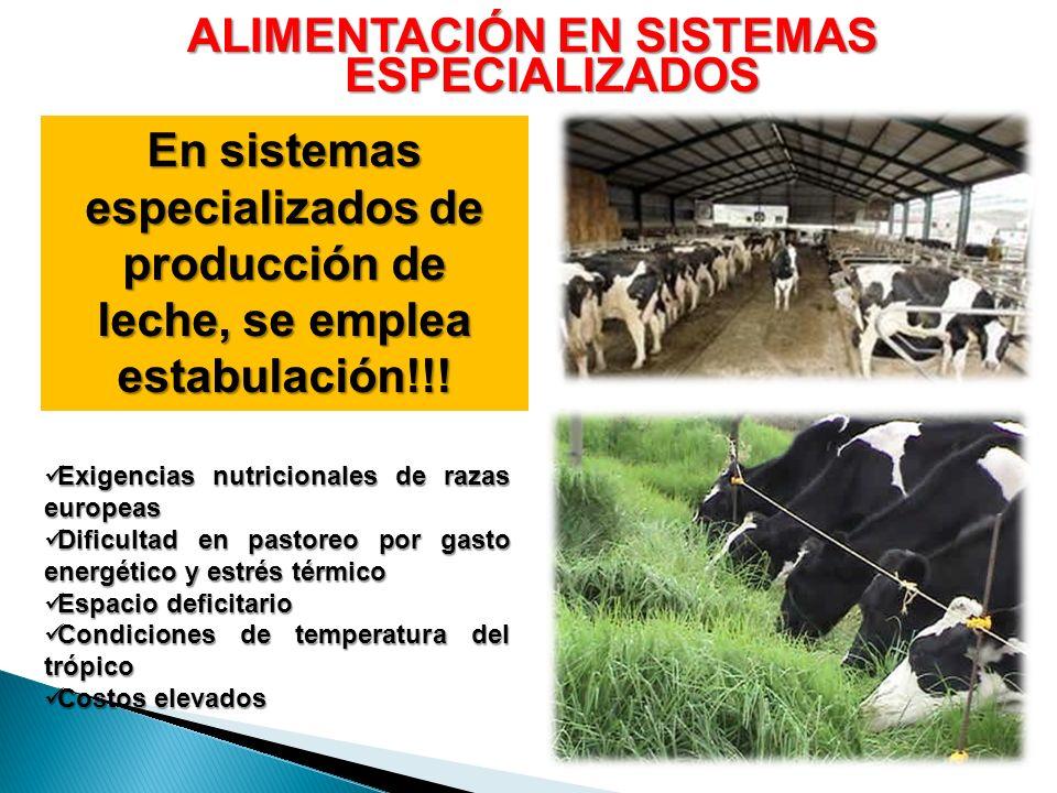 ALIMENTACIÓN EN SISTEMAS ESPECIALIZADOS En sistemas especializados de producción de leche, se emplea estabulación!!! Exigencias nutricionales de razas