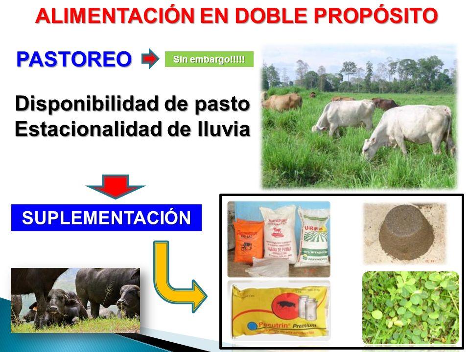 ALIMENTACIÓN EN DOBLE PROPÓSITO PASTOREO Sin embargo!!!!! SUPLEMENTACIÓN Disponibilidad de pasto Estacionalidad de lluvia
