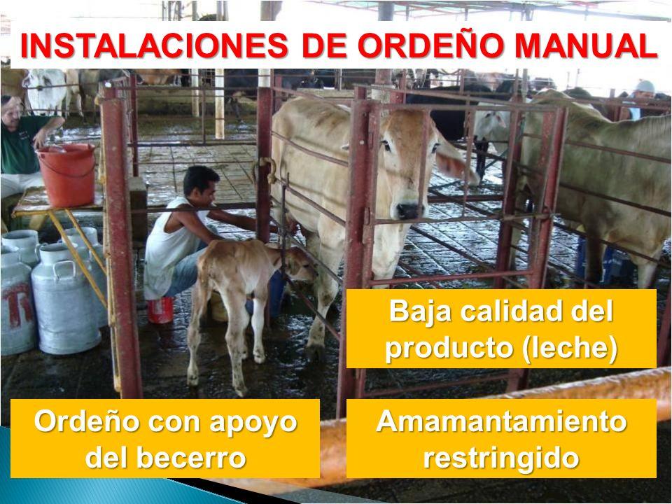 INSTALACIONES DE ORDEÑO MANUAL Ordeño con apoyo del becerro Amamantamiento restringido Baja calidad del producto (leche)