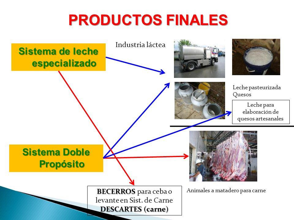 PRODUCTOS FINALES Sistema de leche especializado Sistema Doble Propósito Industria láctea Leche pasteurizada Quesos Animales a matadero para carne BEC