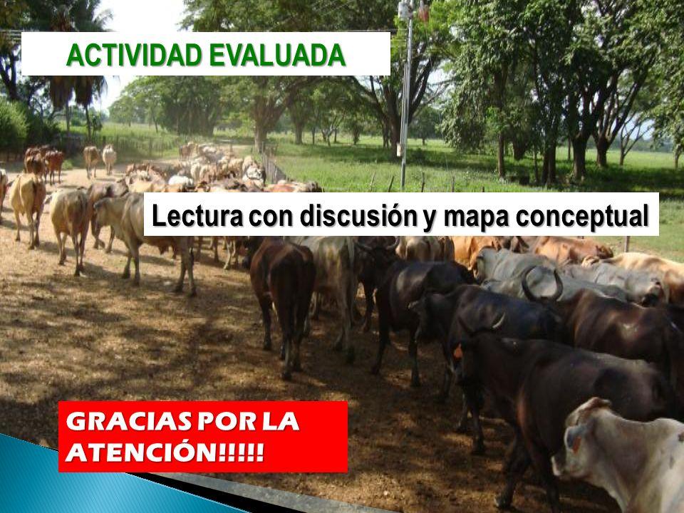 ACTIVIDAD EVALUADA Lectura con discusión y mapa conceptual GRACIAS POR LA ATENCIÓN!!!!!