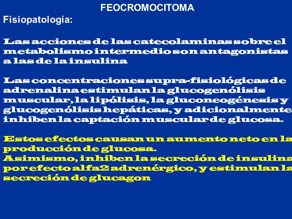 FEOCROMOCITOMA Fisiopatología: Las acciones de las catecolaminas sobre el metabolismo intermedio son antagonistas a las de la insulina Las concentraci
