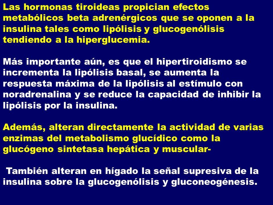 Las hormonas tiroideas propician efectos metabólicos beta adrenérgicos que se oponen a la insulina tales como lipólisis y glucogenólisis tendiendo a l