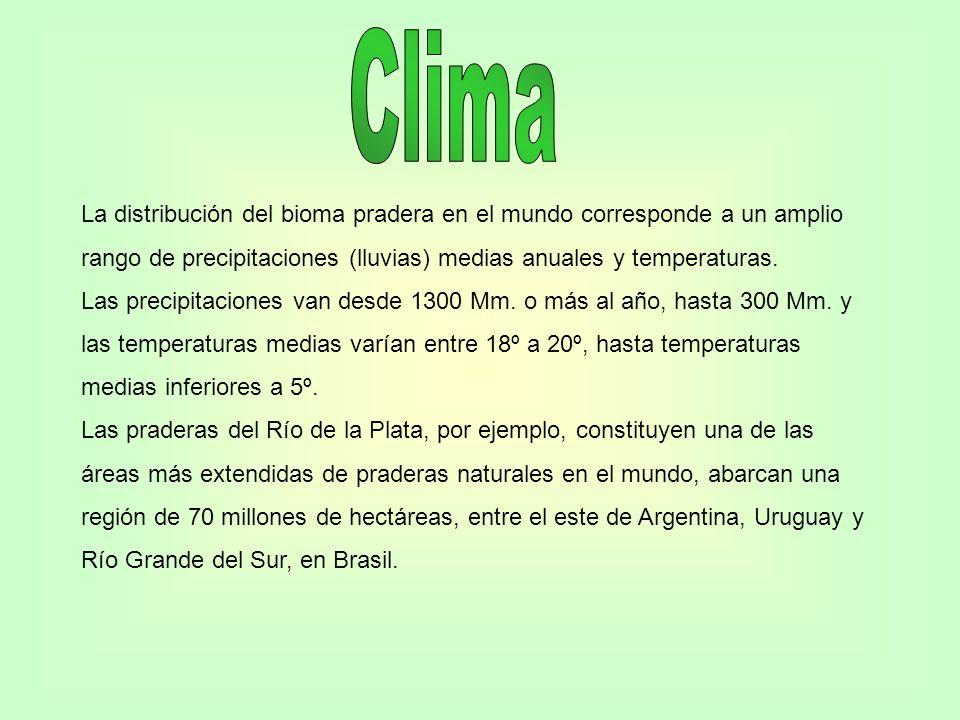 La distribución del bioma pradera en el mundo corresponde a un amplio rango de precipitaciones (lluvias) medias anuales y temperaturas. Las precipitac