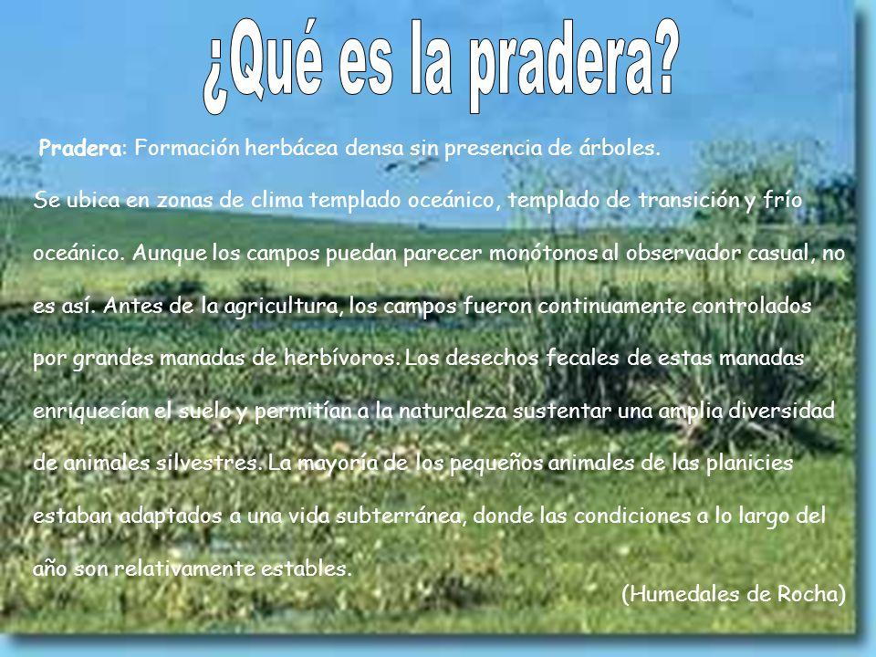 Pradera: Formación herbácea densa sin presencia de árboles. Se ubica en zonas de clima templado oceánico, templado de transición y frío oceánico. Aunq