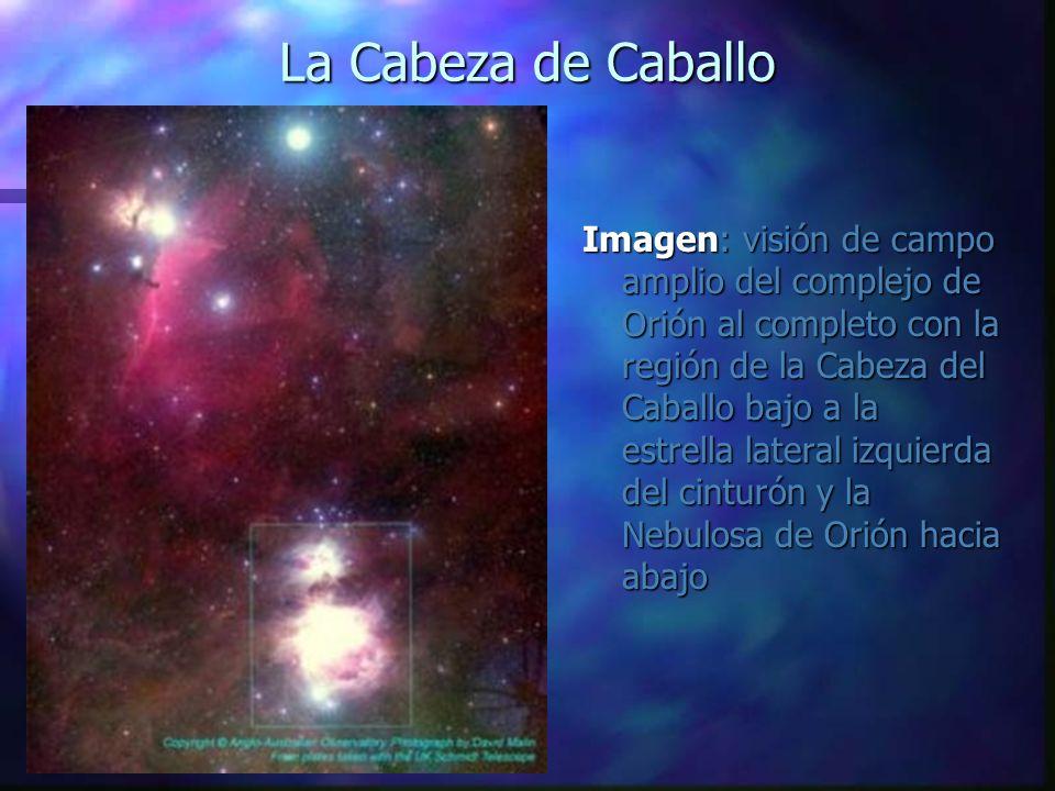 La Cabeza de Caballo Imagen: visión de campo amplio del complejo de Orión al completo con la región de la Cabeza del Caballo bajo a la estrella latera