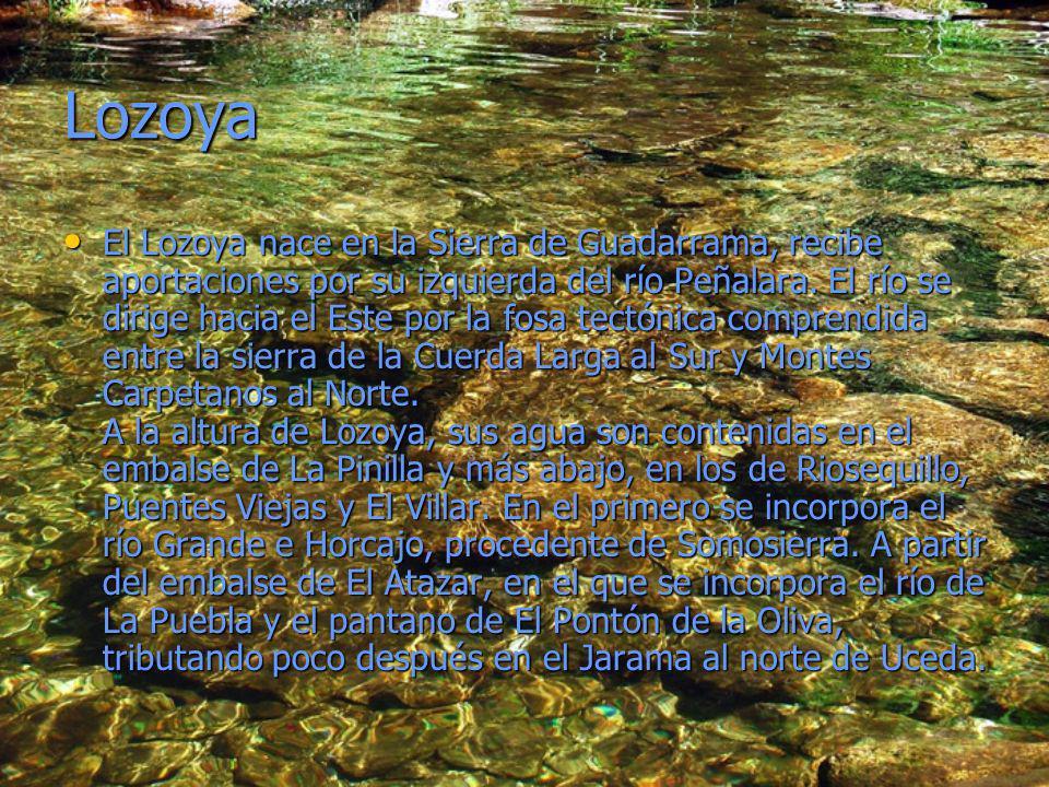 Lozoya El Lozoya nace en la Sierra de Guadarrama, recibe aportaciones por su izquierda del río Peñalara. El río se dirige hacia el Este por la fosa te