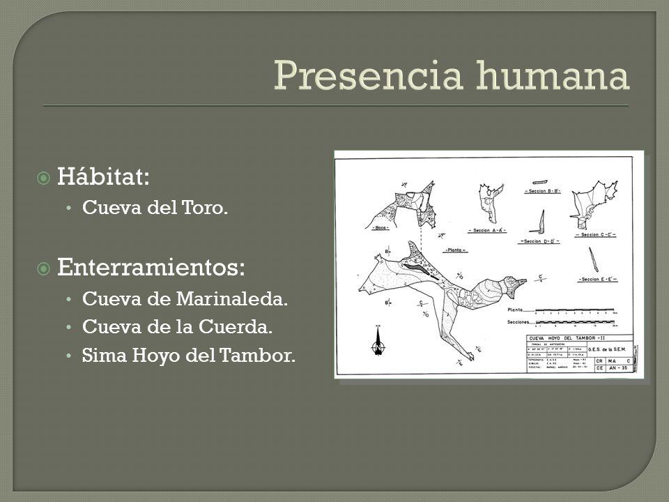 Presencia humana Hábitat: Cueva del Toro. Enterramientos: Cueva de Marinaleda. Cueva de la Cuerda. Sima Hoyo del Tambor.