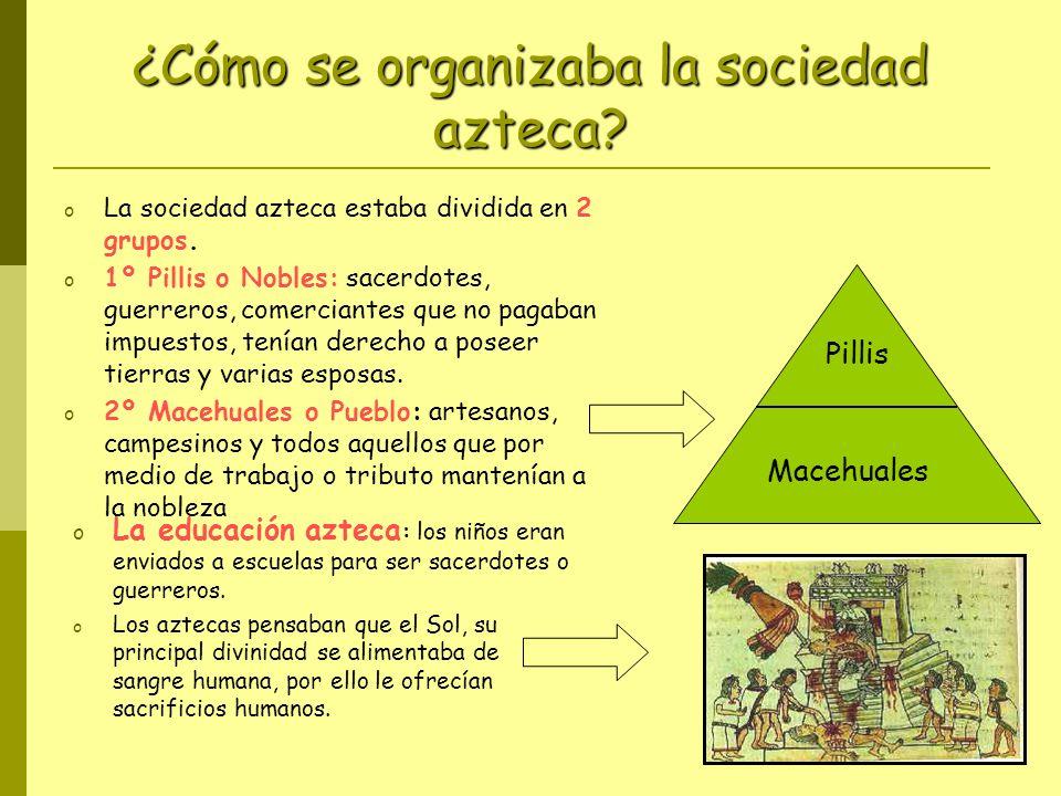 ¿Cómo se organizaba la sociedad azteca? o La sociedad azteca estaba dividida en 2 grupos. o 1º Pillis o Nobles: sacerdotes, guerreros, comerciantes qu