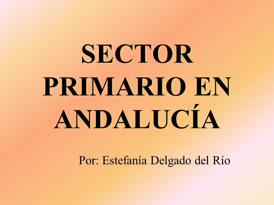 SECTOR PRIMARIO EN ANDALUCÍA Por: Estefanía Delgado del Río