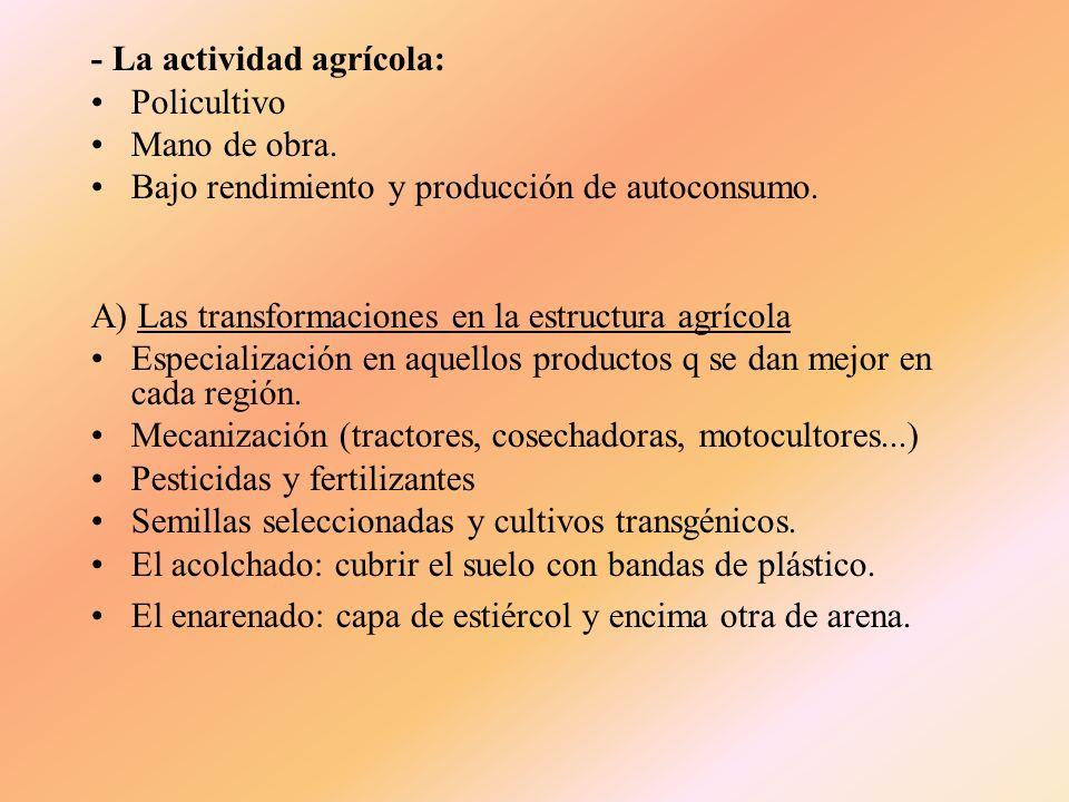 - Tamaño de las explotaciones. Latifundio: (+ de 500 fanegas) es la explotación agraria que tiene una gran extensión, lo cual obliga en la mayor parte