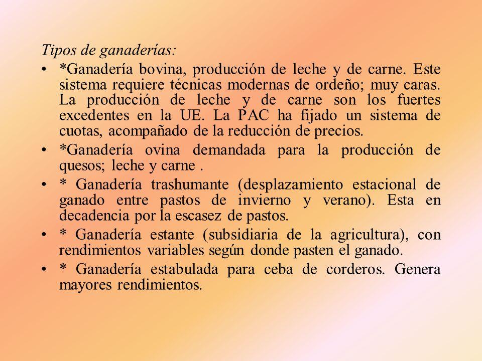 B) La producción ganadera La producción ha aumentado. Causas: Mecanización del campo Conservación del suelo por el cultivo del forraje Necesidad de me