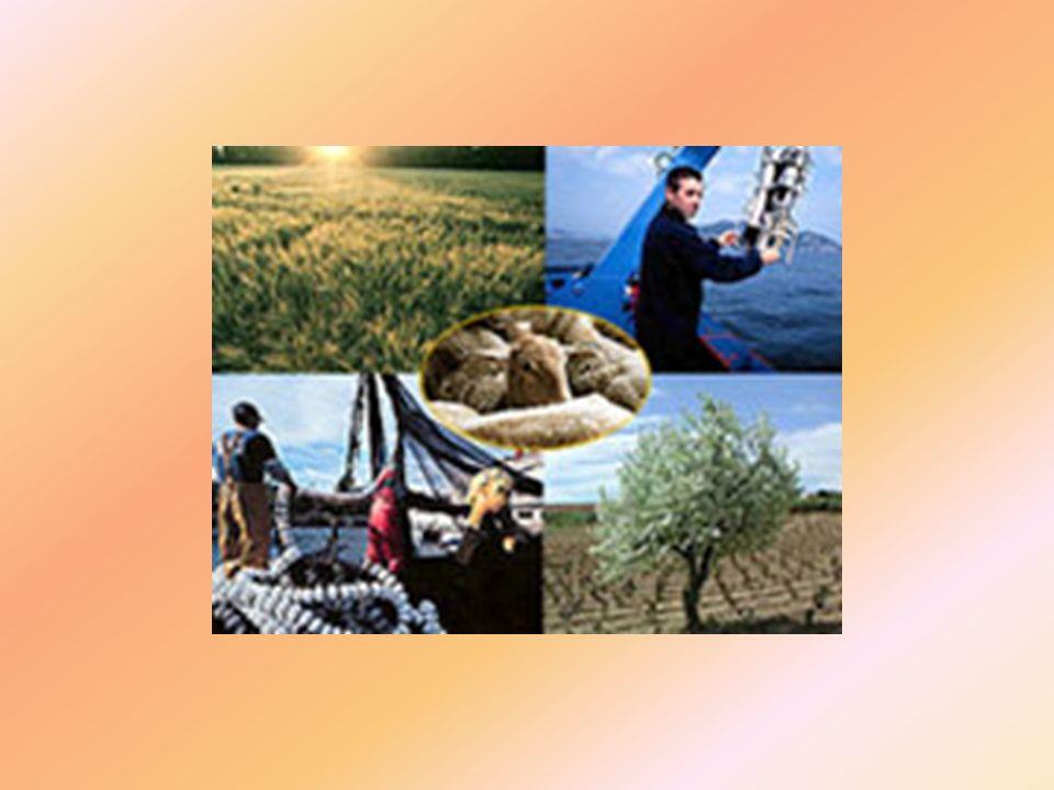 4.CONCLUSIÓN Las actividades agrícolas son las de mayor peso específico, suponiendo un 58% de producción final, seguidas de la ganadería con un 39% y