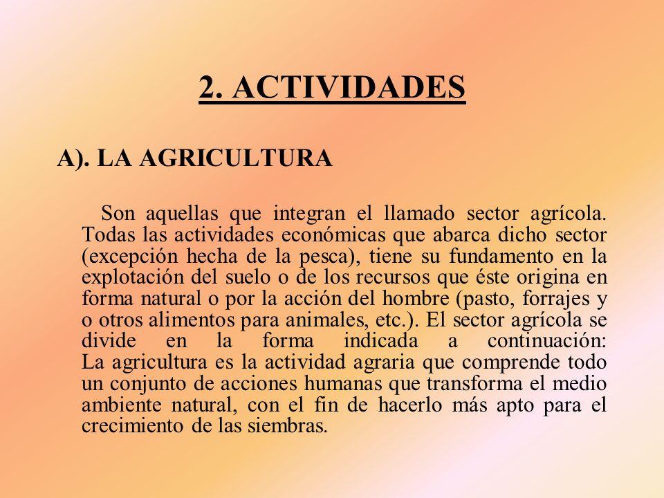 2.ACTIVIDADES A). LA AGRICULTURA Son aquellas que integran el llamado sector agrícola.