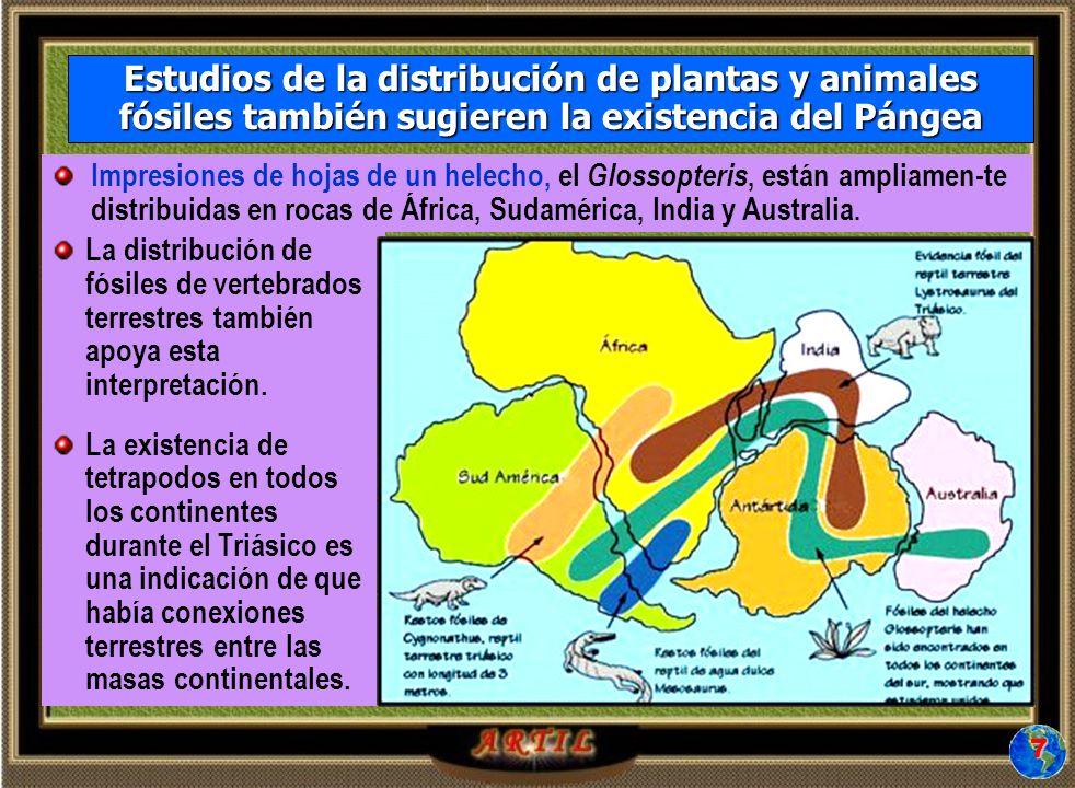 La distribución de fósiles de vertebrados terrestres también apoya esta interpretación.