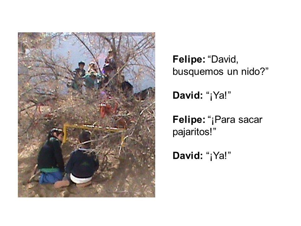 Felipe: David, busquemos un nido? David: ¡Ya! Felipe: ¡Para sacar pajaritos! David: ¡Ya!