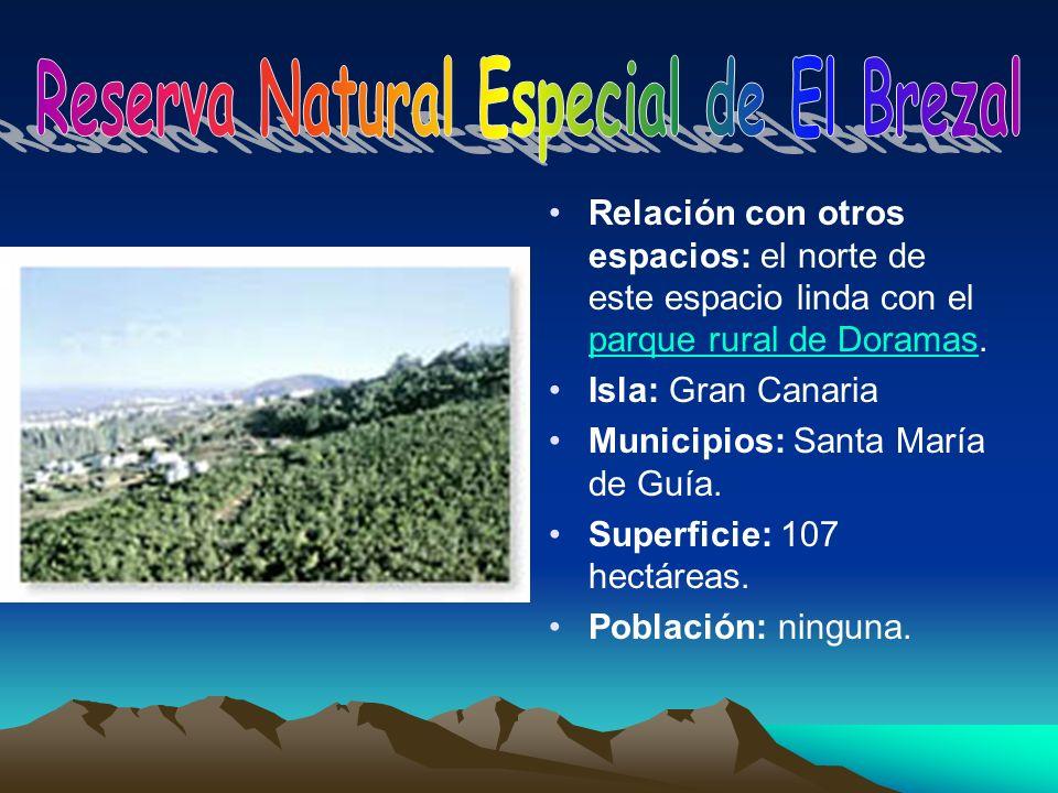 Relación con otros espacios: el norte de este espacio linda con el parque rural de Doramas. parque rural de Doramas Isla: Gran Canaria Municipios: San